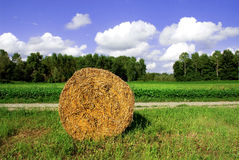 Hay Bale in Field royalty free stock image