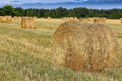 Hay bail harvesting in a field landscape Royalty Free Stock Image