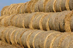 Hay bail harvesting in a field landscape Stock Image