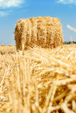 Hay Royalty Free Stock Photos