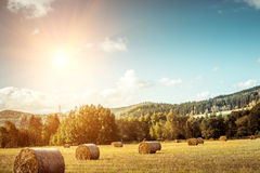 Hay bail harvesting Stock Photography