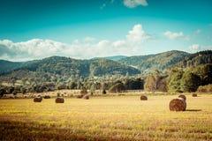 Hay bail harvesting. In golden field landscape Stock Photo