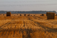 Hay bail harvesting in golden field landscape Stock Photos