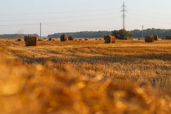 Hay bail harvesting in golden field landscape Stock Photography