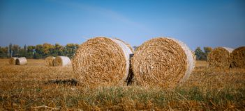 Hay Bail Harvesting In Wonderful Autumn Farmers Field Landscape With Hay Stacks Stock Photography