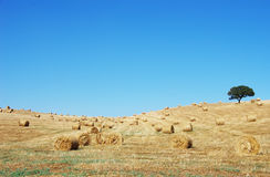 Hay bail harvesting in Portugal Stock Photography