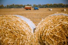 Hay bail harvesting in wonderful autumn farmers field landscape with hay stacks. After cropping and golden ripening wheat field royalty free stock photography