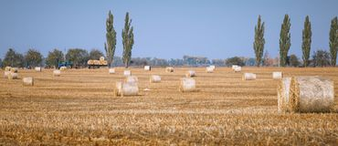 Hay bail harvesting in wonderful autumn farmers field landscape with hay stacks. After cropping and golden ripening wheat field royalty free stock images