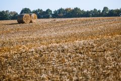Hay bail harvesting in wonderful autumn farmers field landscape with hay stacks. After cropping and golden ripening wheat field royalty free stock photo