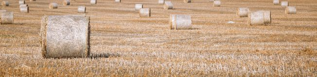 Hay bail harvesting in wonderful autumn farmers field landscape with hay stacks. After cropping and golden ripening wheat field royalty free stock photos