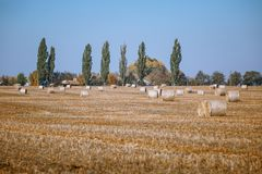 Hay bail harvesting in wonderful autumn farmers field landscape with hay stacks. After cropping and golden ripening wheat field royalty free stock image