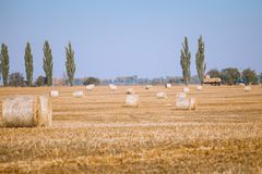 Hay bail harvesting in wonderful autumn farmers field landscape. With hay stacks after cropping and golden ripening wheat field stock images