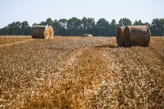 Hay bail harvesting in wonderful autumn farmers field landscape with hay stacks. After cropping and golden ripening wheat field stock photo