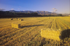 Hay bails. With the Topa Topa mountains in the background, Ojai, CA royalty free stock image