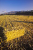 Hay bails. With the Topa Topa mountains in the background, Ojai, CA royalty free stock photos
