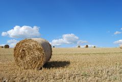 Hay bails. In a field prepared for harvest stock photos