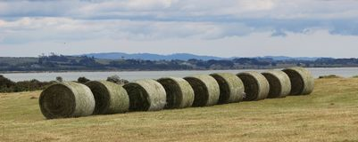 Hay Bails Auckland New Zealand. Hay Bails and Beautiful View ocean and landscape Puhinui Reserve Auckland New Zealand stock images