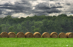 Hay bails in a field Royalty Free Stock Image