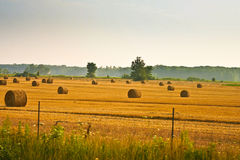 Hay Bails in a Field. Hay bails that have been harvested laying in the field stock images