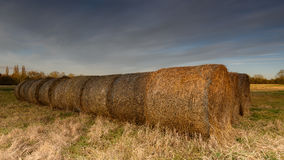 Hay Bails. In a field at sunset stock image