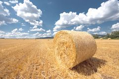 Hay bails on the field Stock Photos