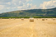 Hay bails on the field Stock Image