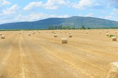Hay bails on the field Stock Photography