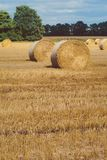 Hay bails harvesting in golden field landscape. Some green trees in background royalty free stock photos