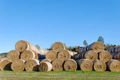 Hay Bails in Pyramids. Multiple hay bails arranged in pyramids against clear blue sky Royalty Free Stock Images