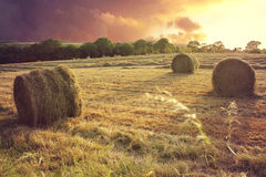 Hay bails at sunset. Just rolled hey bails in an English country side shot a sunset stock images
