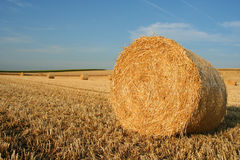 Hay bale. A hay bale in a field Stock Image