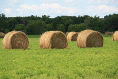 Hay Bale. Sitting on green grass Royalty Free Stock Photography