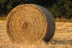 Hay bale. In a field Royalty Free Stock Images