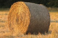 Hay bale. In a field Royalty Free Stock Photos