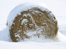 Hay bale. In snow all rolled-up Royalty Free Stock Photos