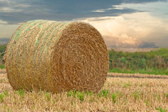 Hay bale Royalty Free Stock Images