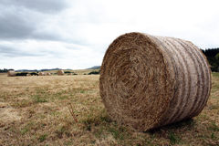 Hay Bale. Round hay bale on recently harvested field Stock Photo
