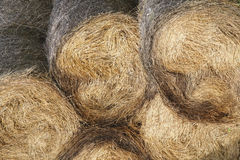 Hay bale. Texture of some hay bale Stock Photos