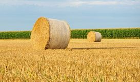 Hay bale. Royalty Free Stock Images