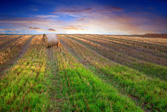 Hay bale. On harvested field in evening light Stock Image