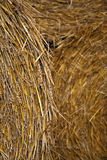 Hay bale. Close up of hay bale in harvest season Stock Images