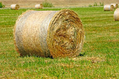 Hay bale. From freshly cut grass, close up Stock Images