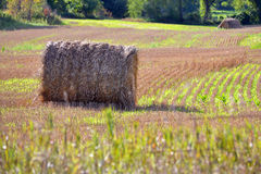 Hay Bale. In Farmers field countryside Royalty Free Stock Image