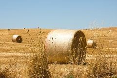 Hay Bale. Scenery. Summer blue sky Stock Photography