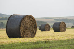 Hay bale. Royalty Free Stock Photography