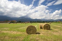 Hay bale. The field with hay rolls royalty free stock photos