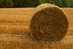 Hay Bale. Round bale of farm hay Royalty Free Stock Photography
