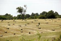 Free Hay Bale Stock Photo - 36206890