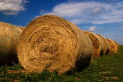 Hay Bale. Rows Royalty Free Stock Photography