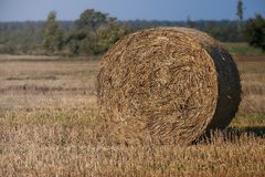 Hay bale. Agriculture field with blue sky. Rural nature in the farm land. Straw on the meadow. Wheat yellow golden harvest Royalty Free Stock Image